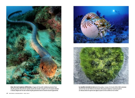 ©National Geographic mai 2011 - Photos Laurent Ballesta