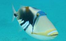 www.biodiversite.nc : un travail collaboratif